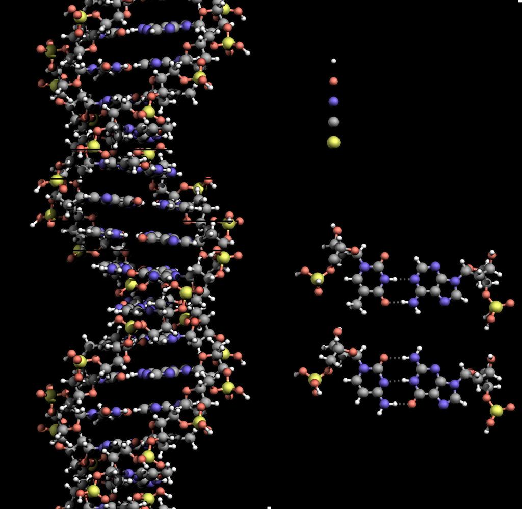 ДНК_атомы