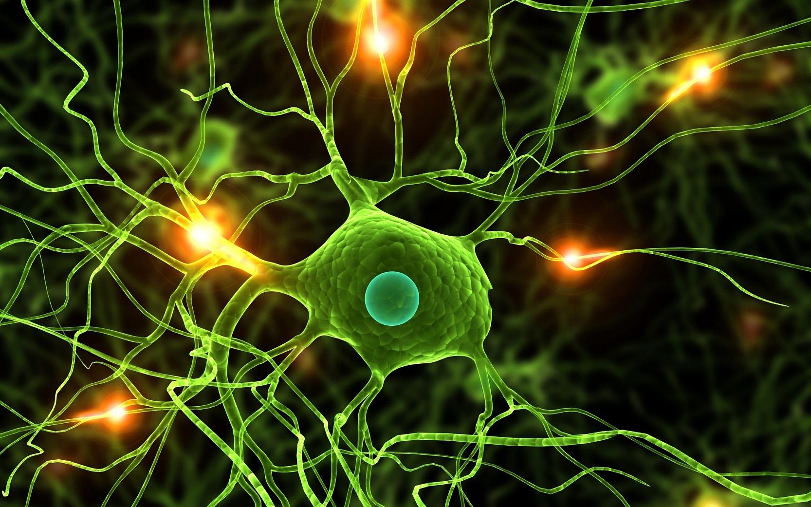 Нейронофагия