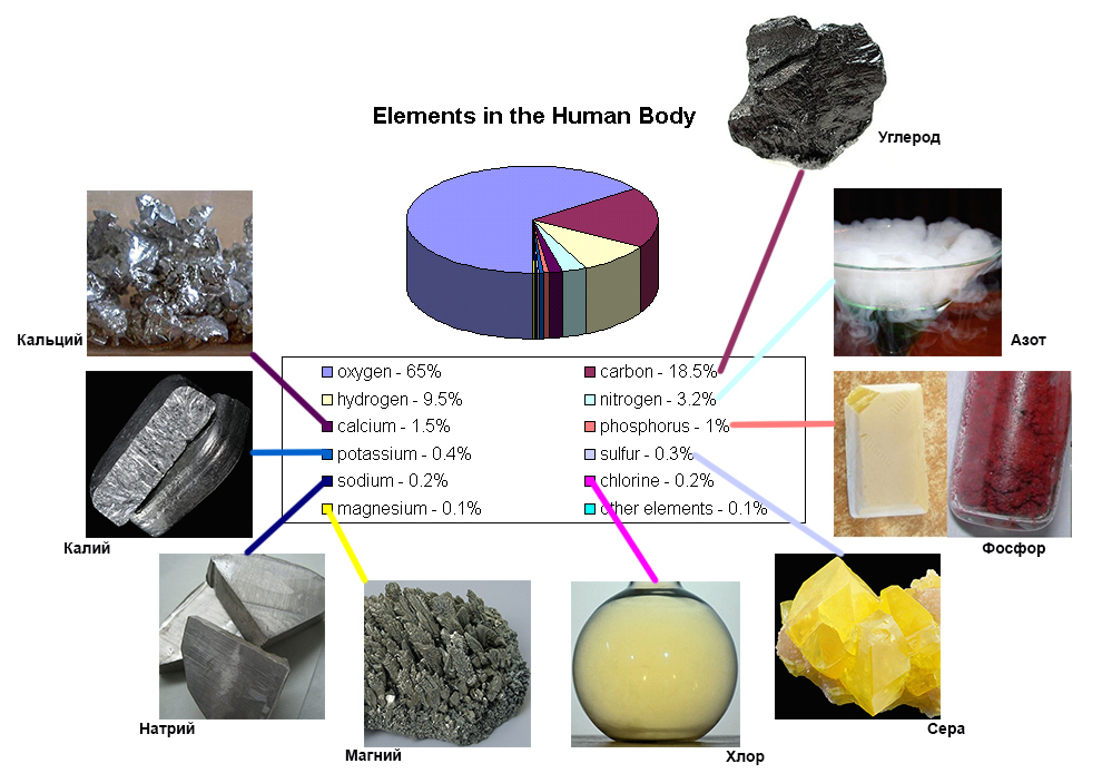 elements in the human body1