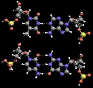 hydrogen bonds