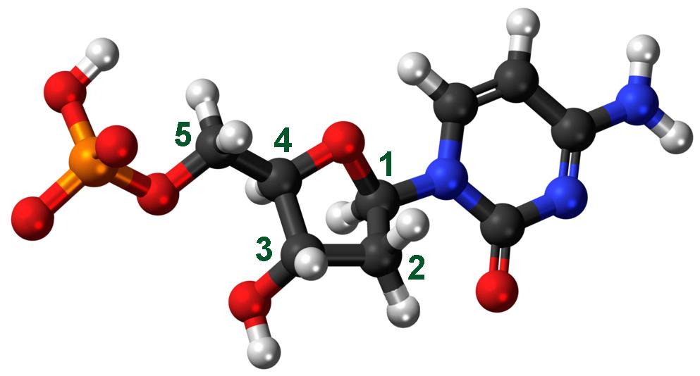 cytosine-3D