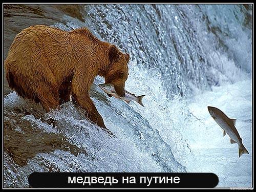medveput