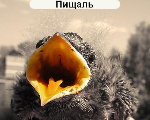 пищаль