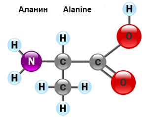 amino-acid-2