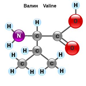 amino-acid-3