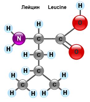 amino-acid-4