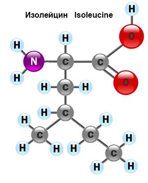 amino-acid-5