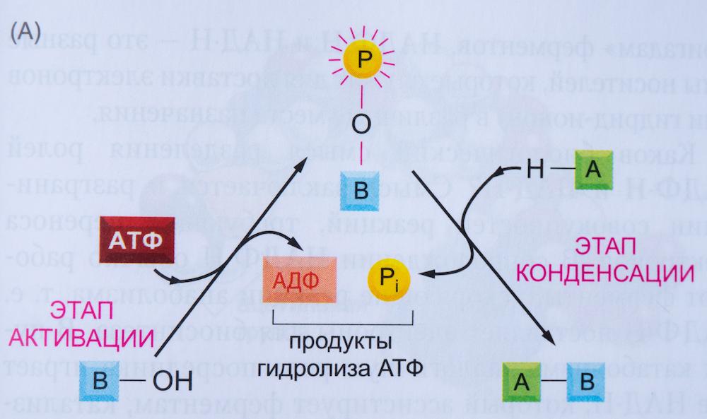 aktivaciya-vysokoenergetichnoi%cc%86-svyazyu-i-prisoedinenie-passivnoi%cc%86-molekuly