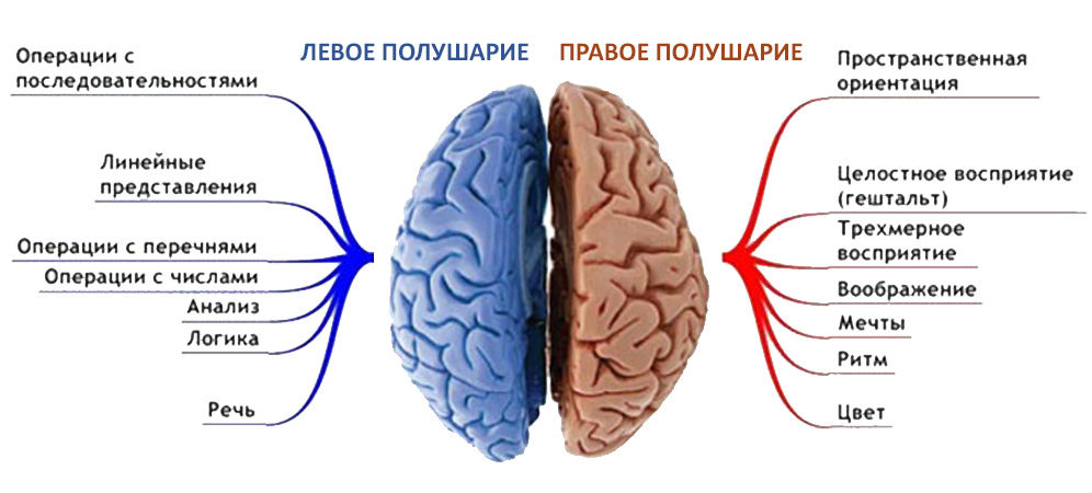 specializaciya-polusharii%cc%86-2